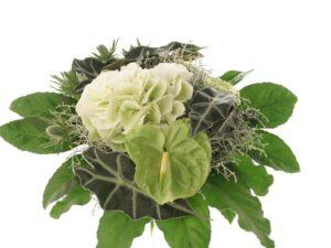 hortensia, gerbera og mandtro sommerbuket