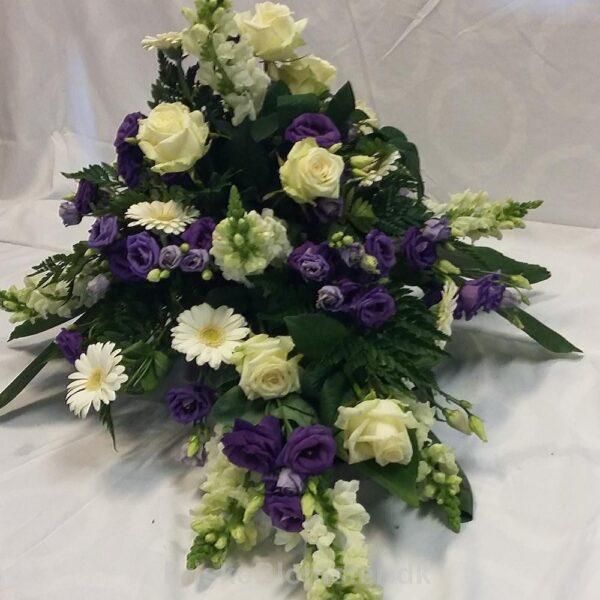 violet og hvid