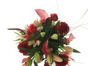 hvid-rød amaryllis