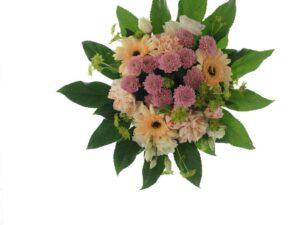 pastelfarvede chrysanthemum