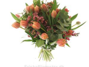 tulipaner og voksblomst