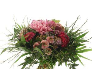 lyserøde chrysanthemum