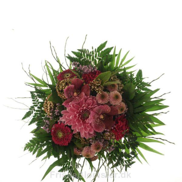 lyserød chrysanthemum