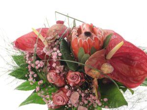 lyserød anturium