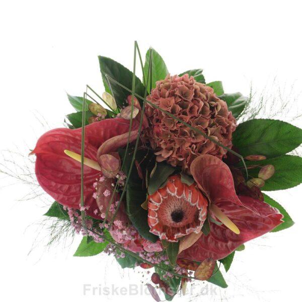 lyserød anthurium