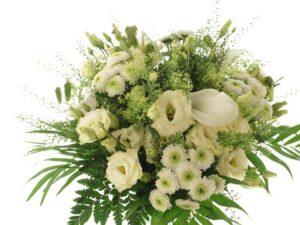 hvid lisianthus