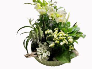 sammenplantning md hvid orkide